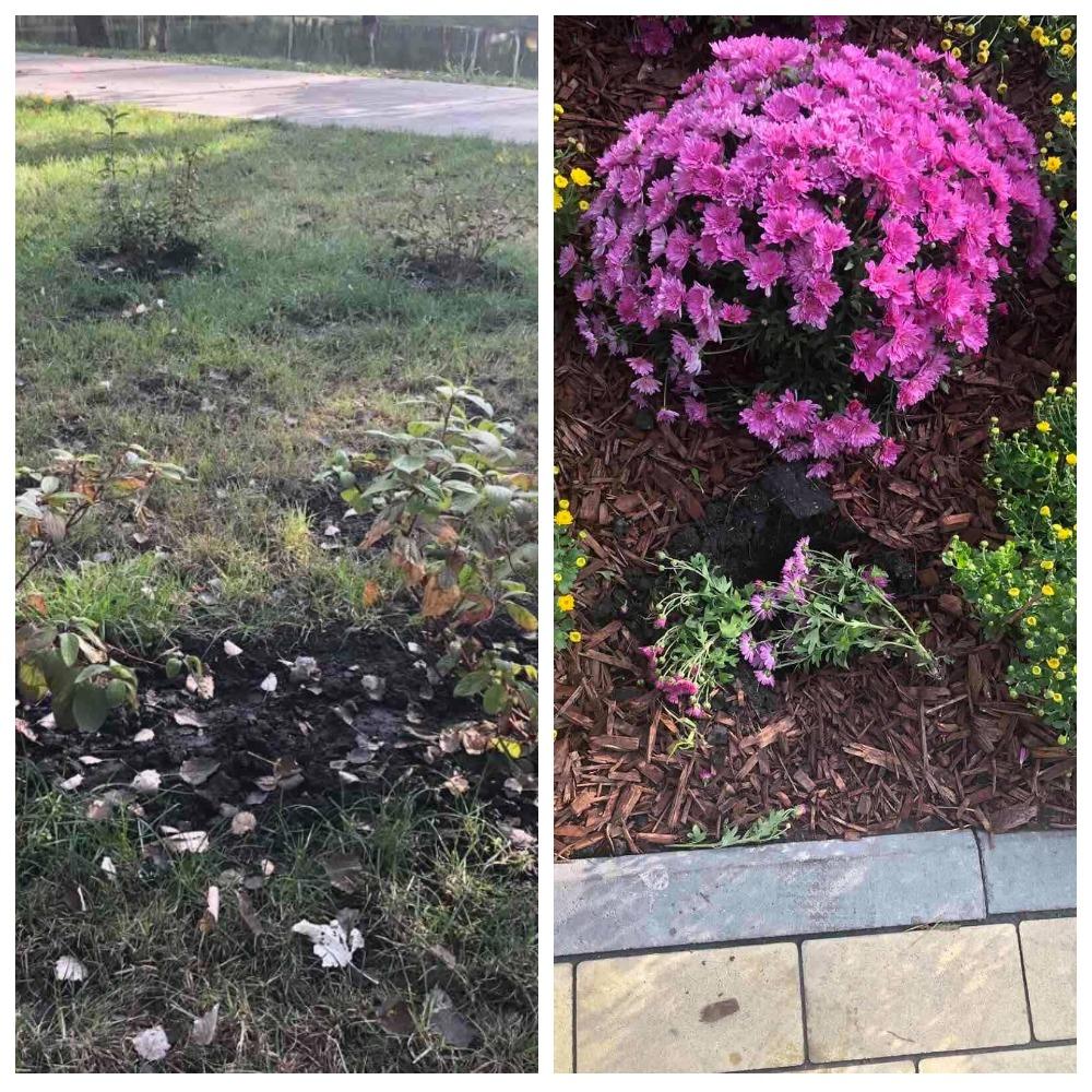 Вандалы в парке вырвали цветы и кусты