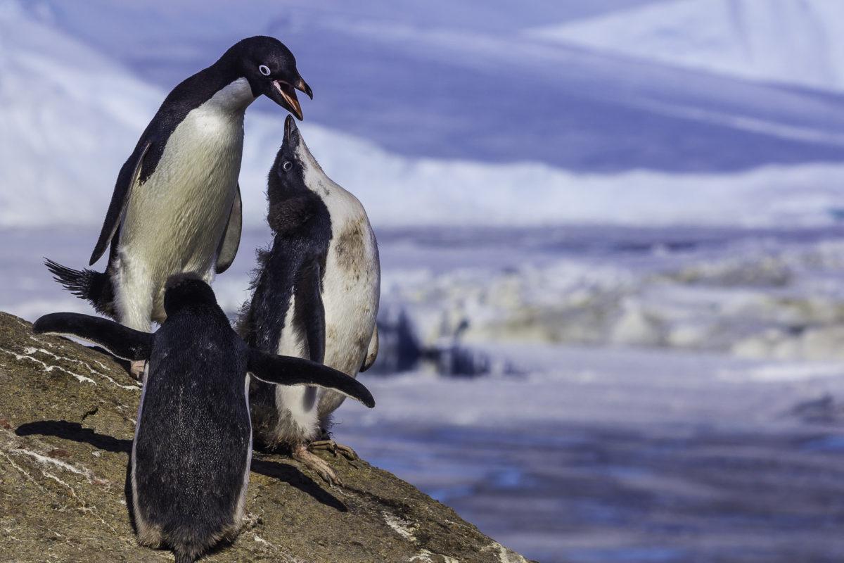 Экспедиция на самый холодный континент займет один месяц