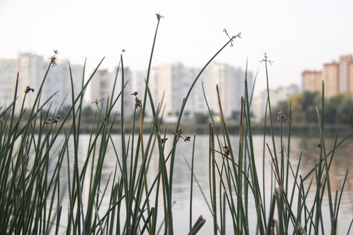 По словам представителей КГГА, благодаря аэрации в озере прекратится мор рыбы