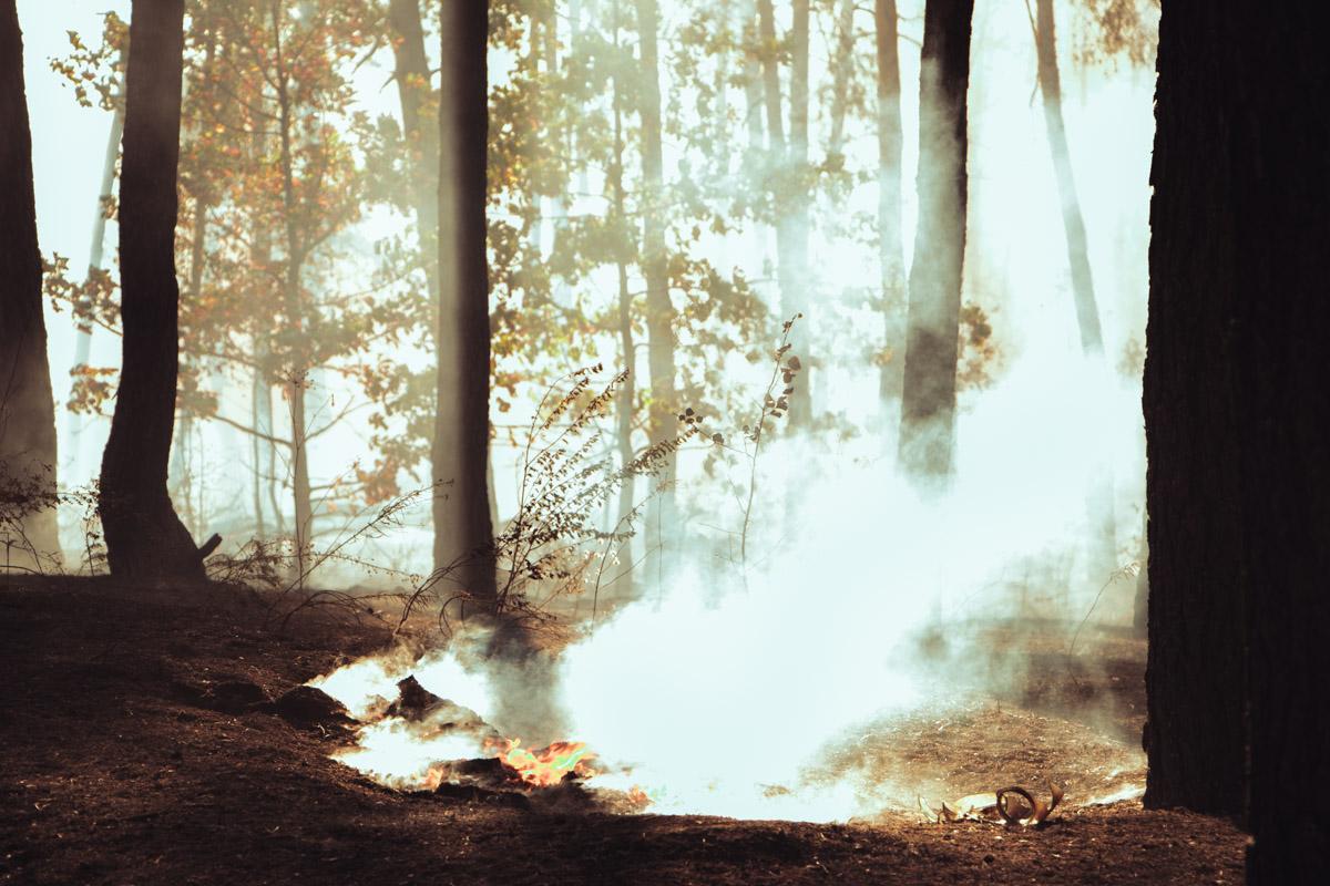 """Загорелся лес, который расположен между станцией метро """"Лесная"""" и супермаркетом Leroy Merlin"""
