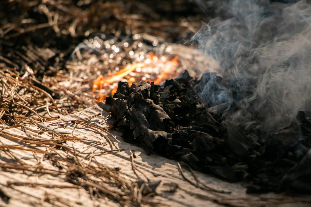 По предварительным данным, на территории леса загорелся травяной настил и мусор