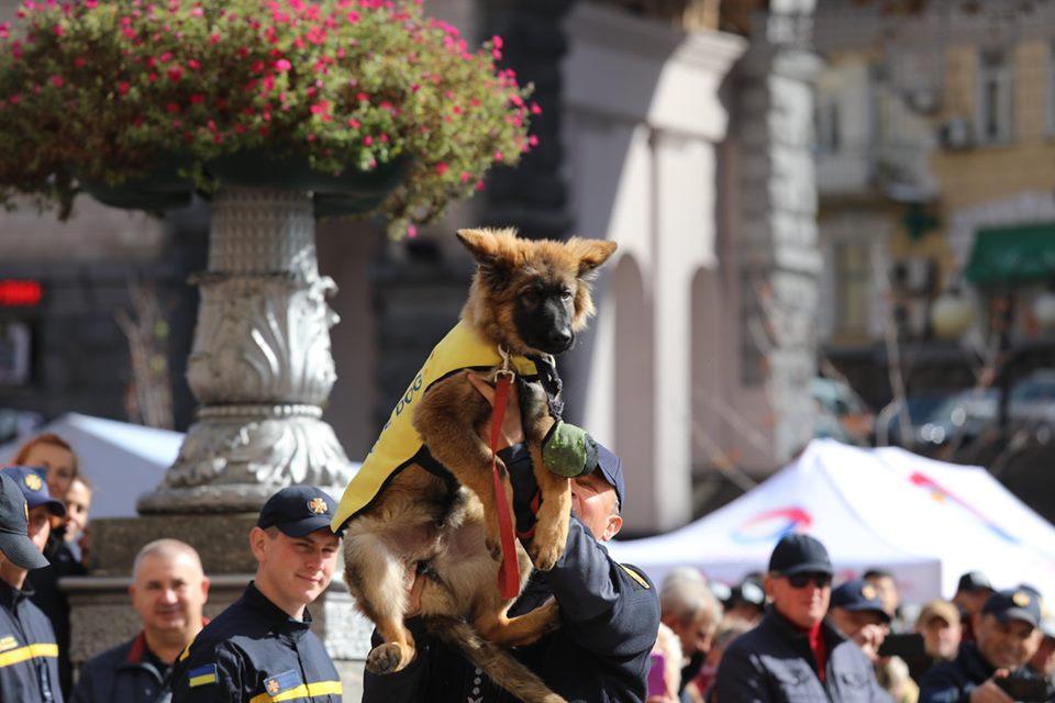 5 щенков посвятили в спасатели - получилась новая и очень милая традиция
