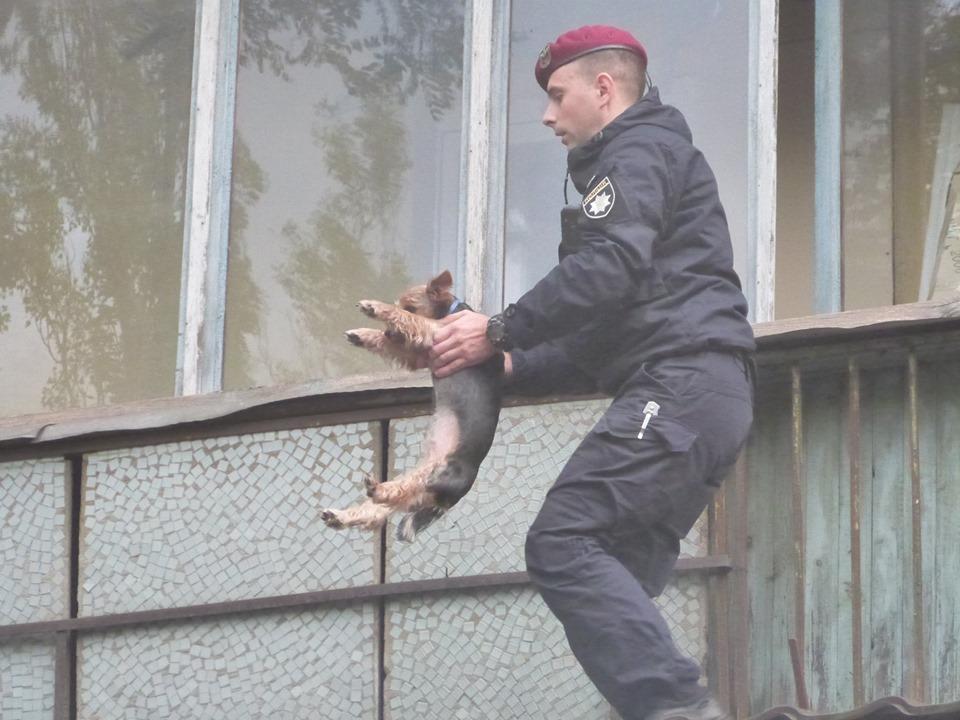Полиция спасла собаку