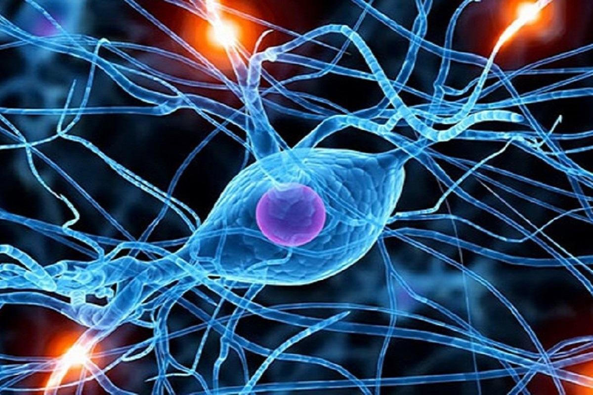 Много интересной информации о нейронауке