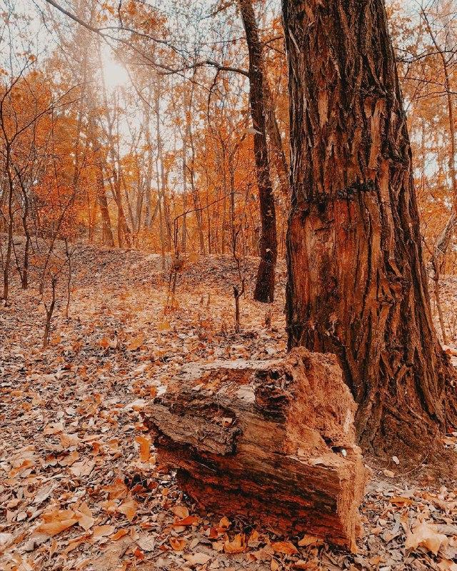 @_l.e.t.a_ сбежала от насыщенных будней в лес. И, как видим, не зря