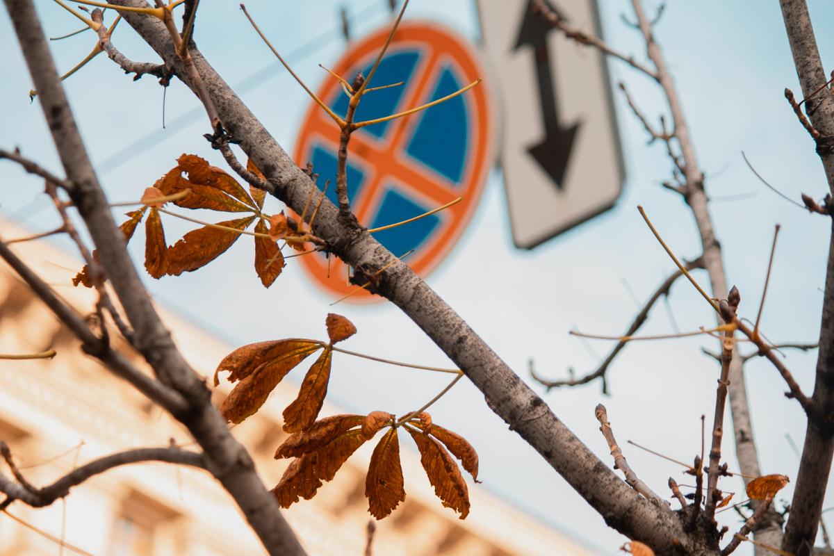О приближении зимы напоминают опавшая листва каштанов