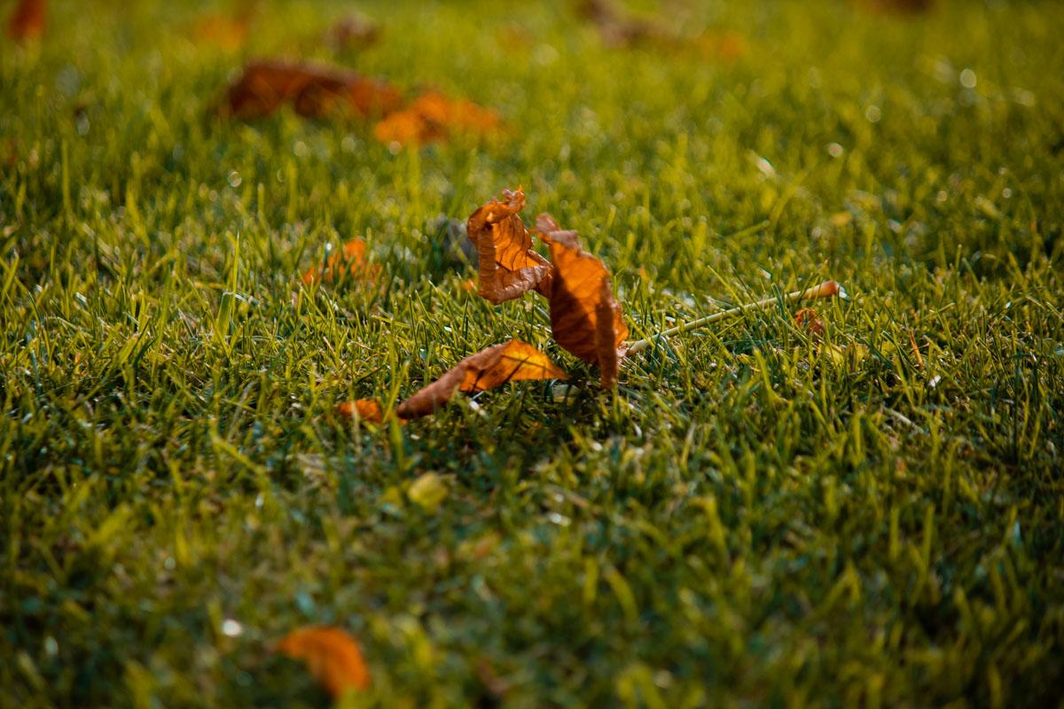 Насладайтесь красками осени вместе с Информатором