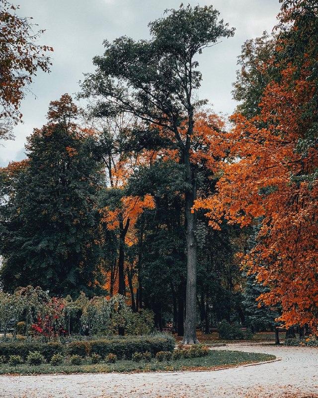 Кто-то знал, что сейчас такая красота в Мариинском парке? Спасибо @sergey.bogun за подсказку