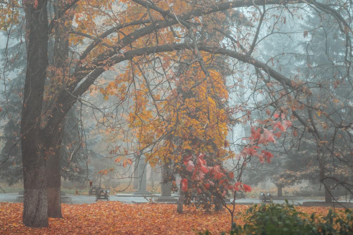 Успейте оценить красоту осени в Киеве