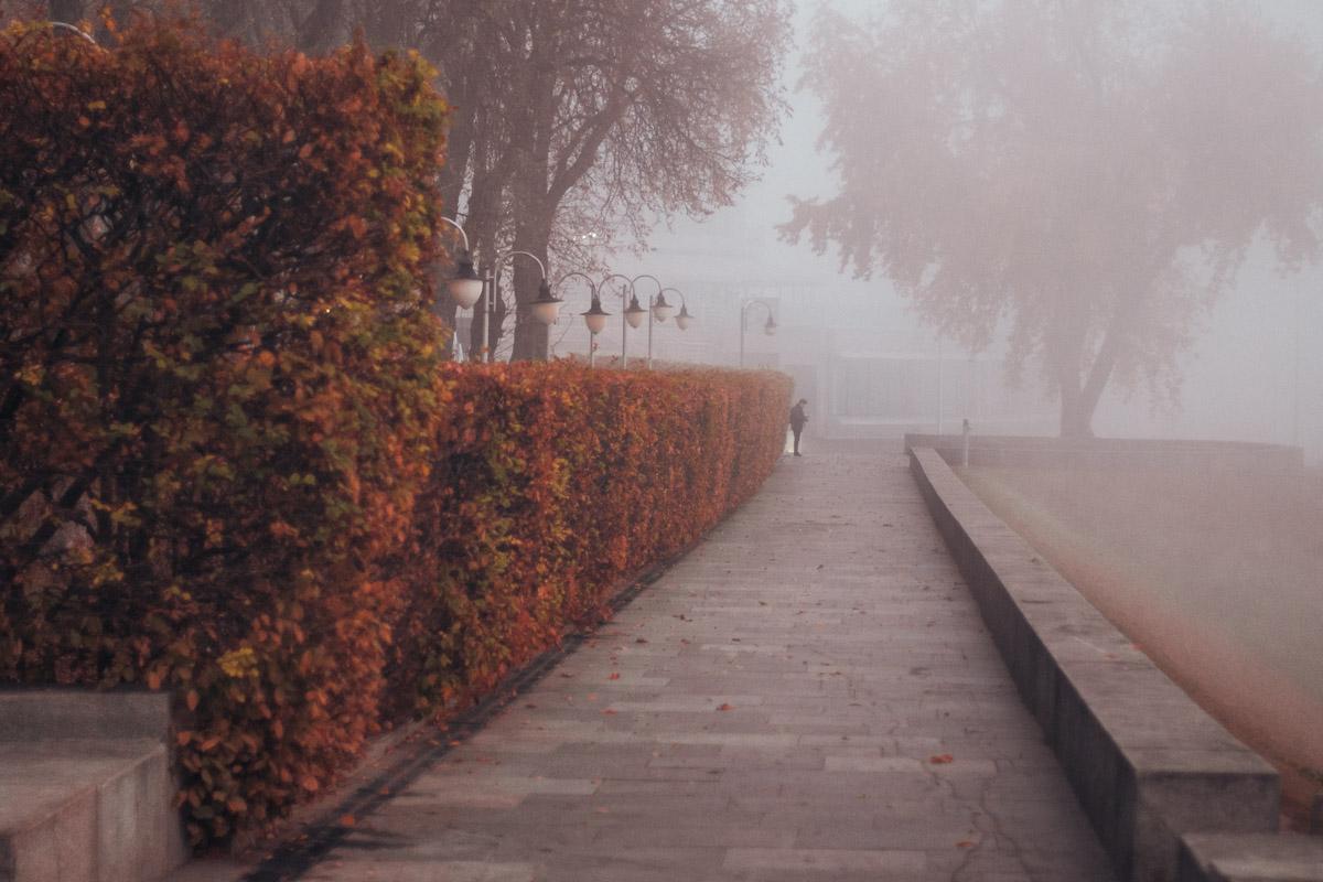 Ядовитые цвета осени