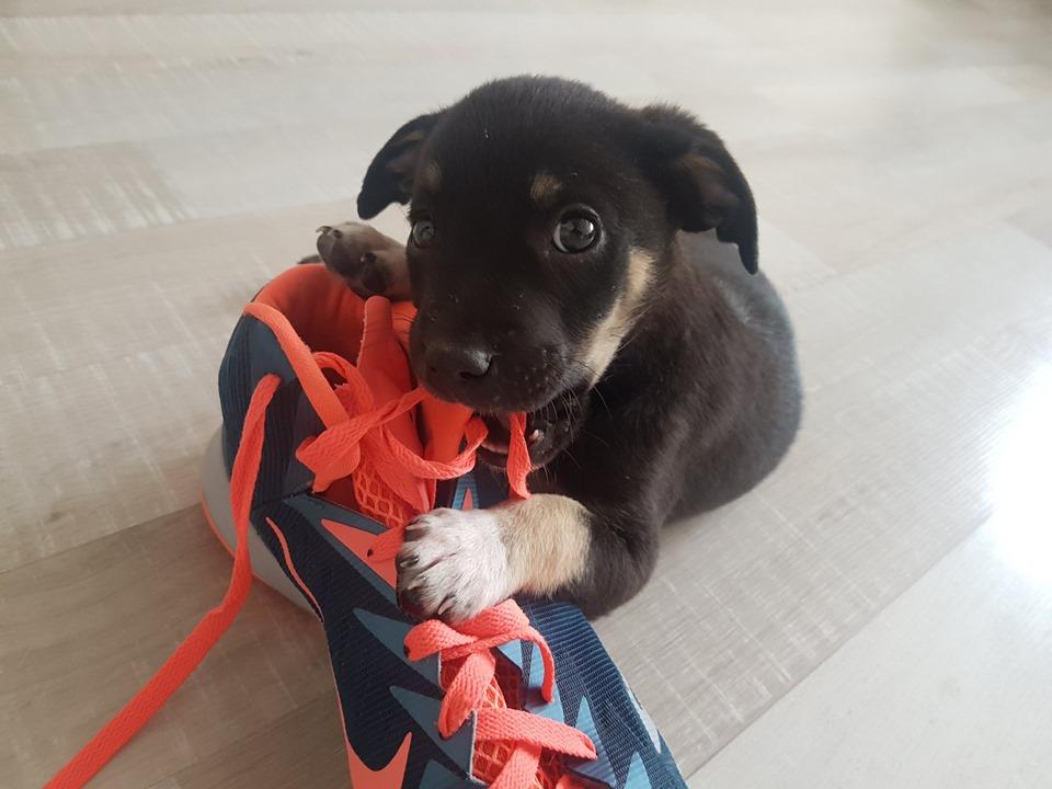 А обувь грызть она отучится, ведь очень умненькая и послушная