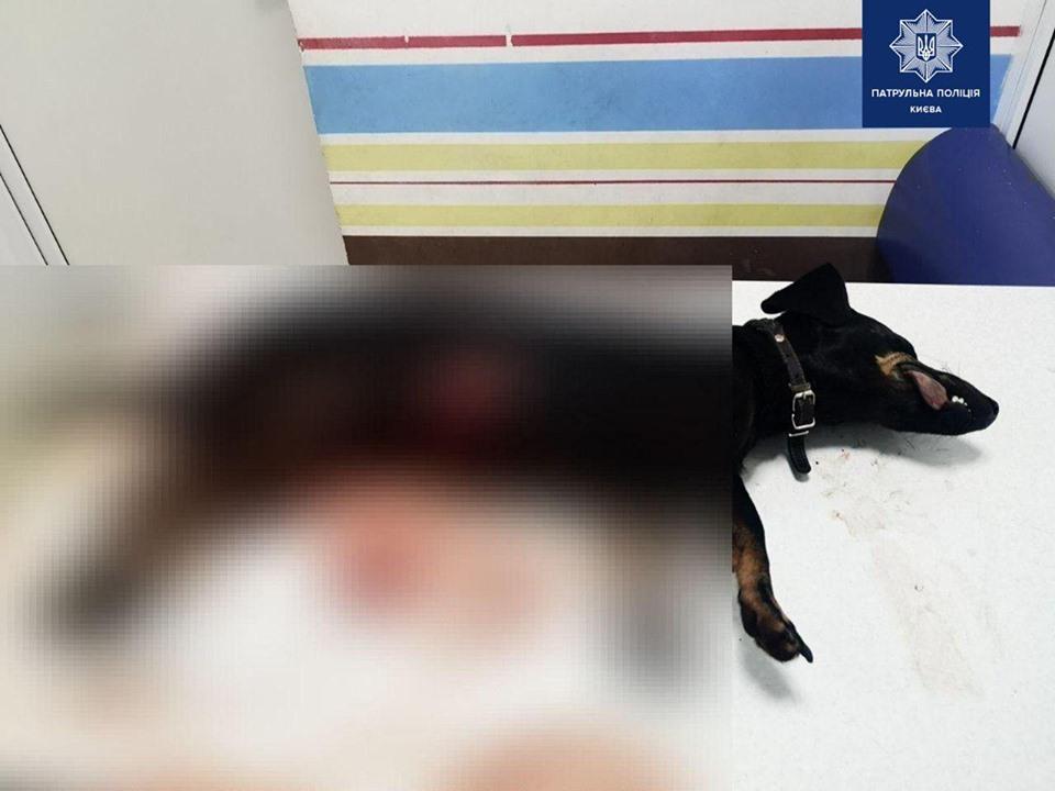 В Киеве мужчина порезал собаку знакомого