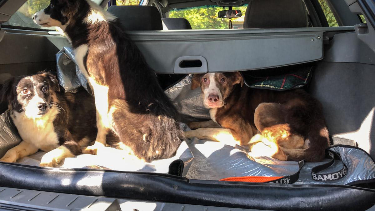 Собак забрали из квартиры и доставили в ветеринарную клинику для обследования