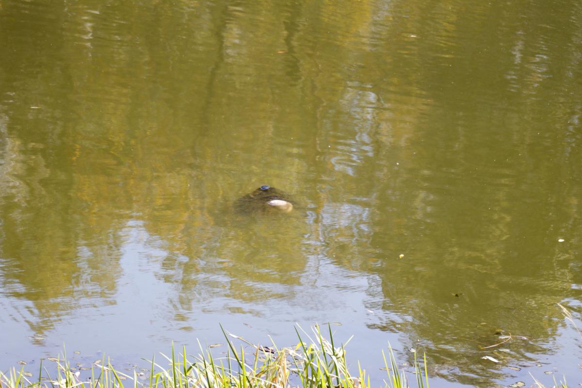 Оказалось, на озере всплыл труп мужчины, из воды виднелась только голова