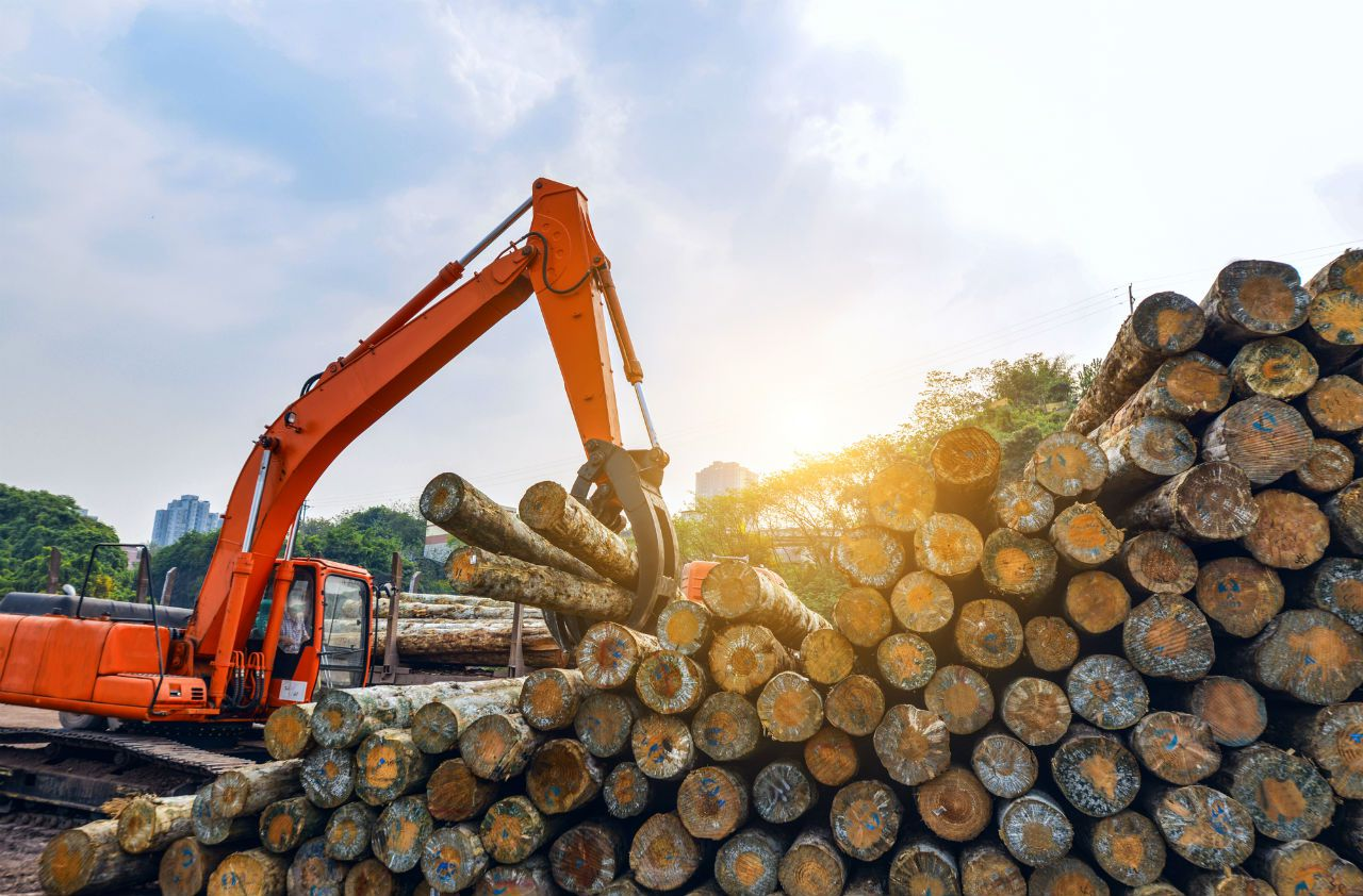В Украине запустили пилотный проект по контролю вырубки лесов