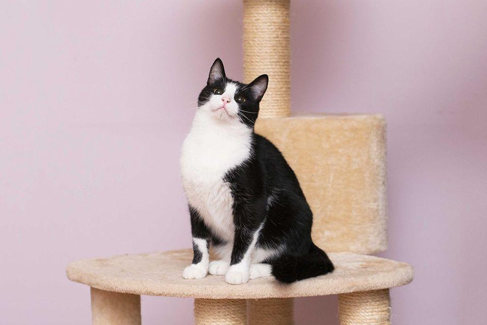 Оззи очень игривый и ласковый кот, который любит фотографироваться