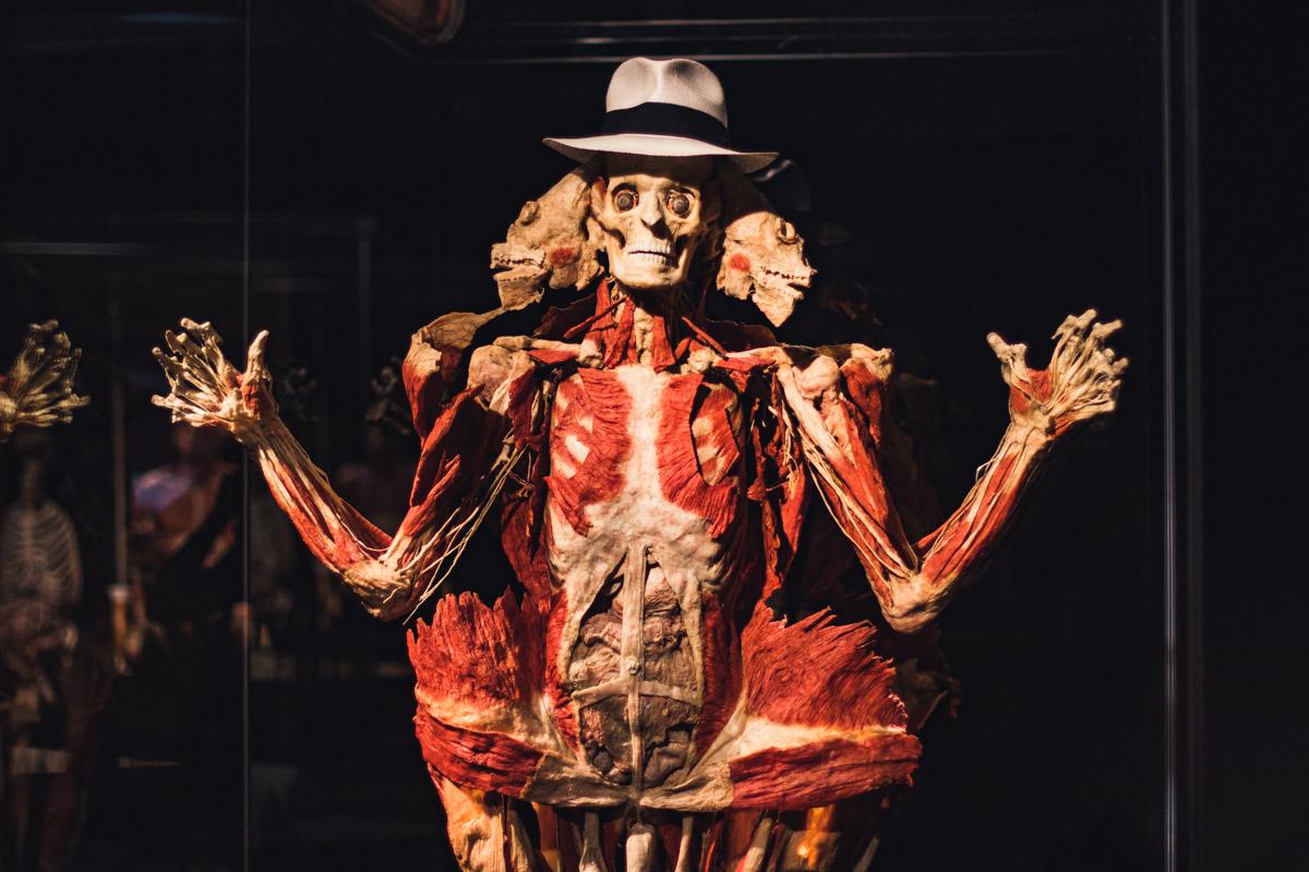 На примерах «живых» инсталляций зрители смогут проследить все изменения, происходящие с телом человека на протяжении жизни