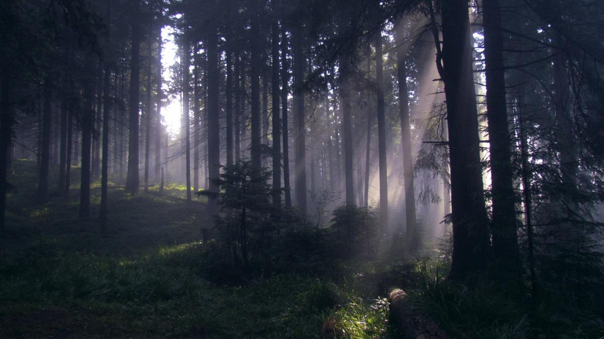 В Карпатах запретили вырубку лесов