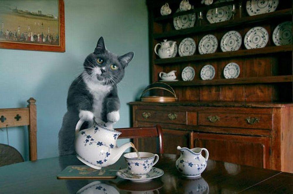 Котики и чай - лучшая компания на вечер