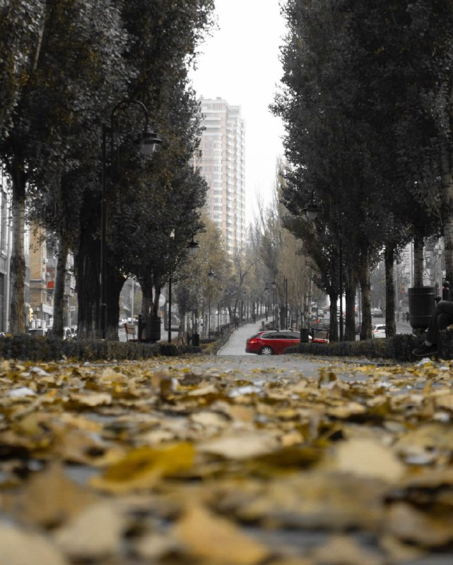 Серый... переодевается к зиме. Фото: @alexey.yurchenko