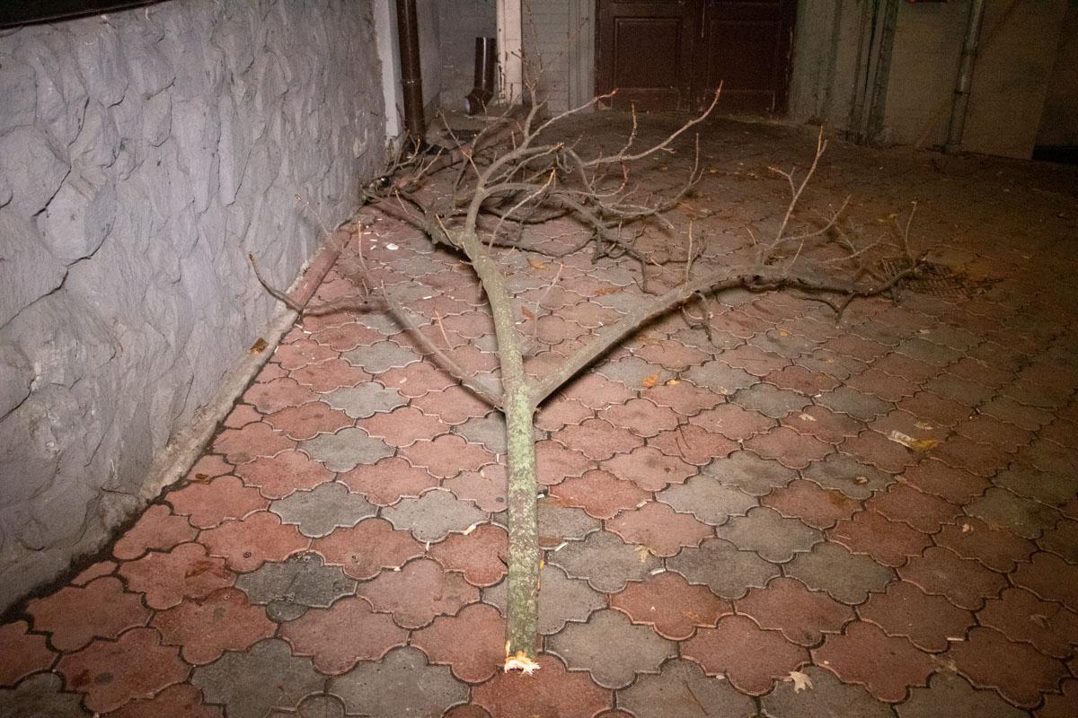 К счастью, ветка дерева частично смягчила падение