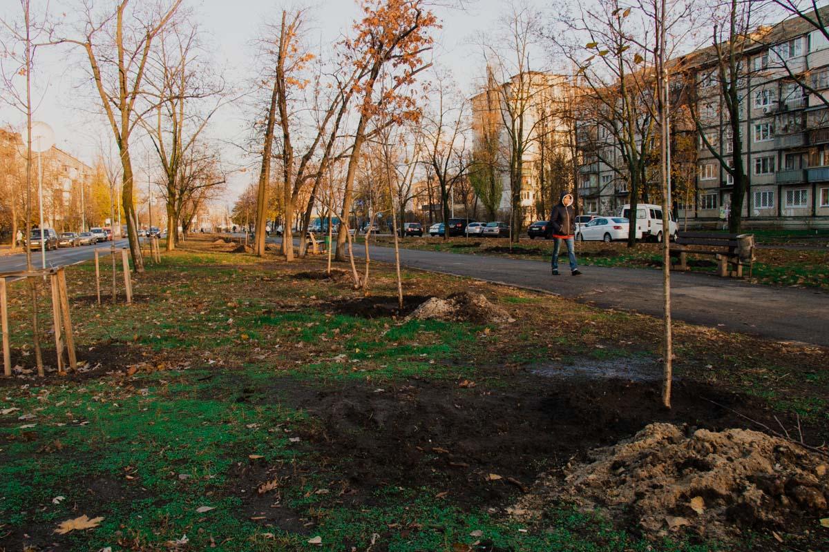 Новые деревья появились еще в трех парках Киева