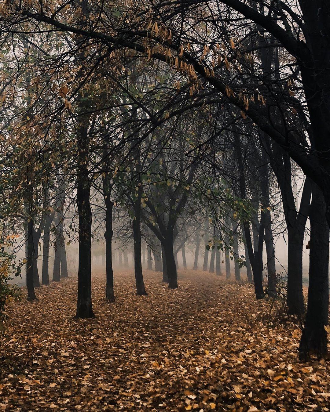 И снова максимально осеннее фото - парк, туман, опавшие листья. И все это - от @inna5sl