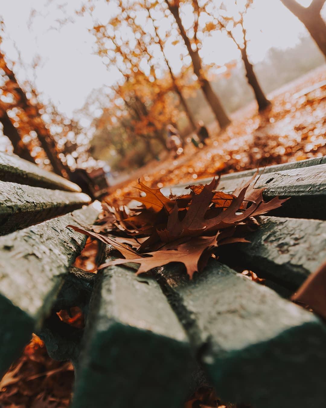 Вообще опавшие листья в осеннем парке - это настоящая классика декаданса. Фото - @maks_kalinichiy