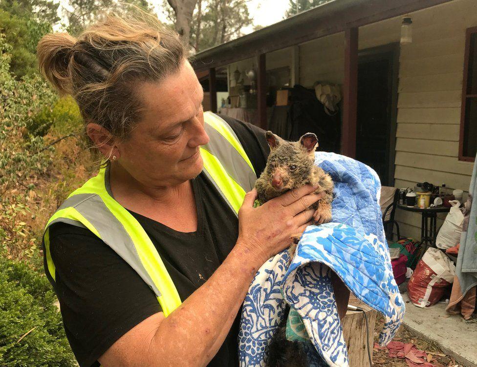 Волонтер держит обгоревшего опоссума, спасенного от пожаров у Голубых гор Австралии. Фото BBC
