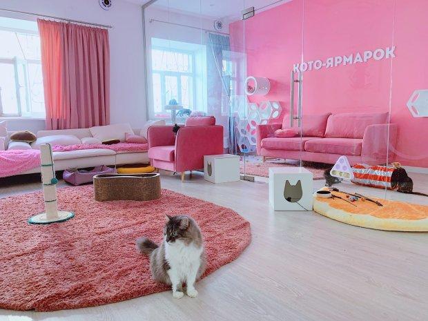 В Центре кототерапии можно по-настоящему расслабится и отдохнуть в компании котиков