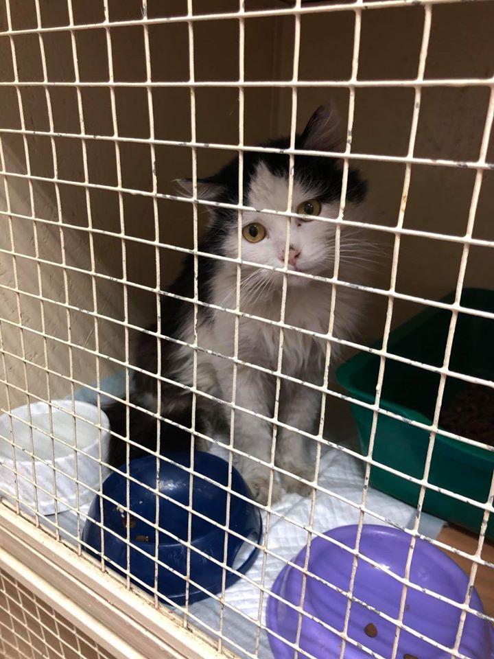 Ромчик - домашний котик и по неизвестным причинам он оказался на улице