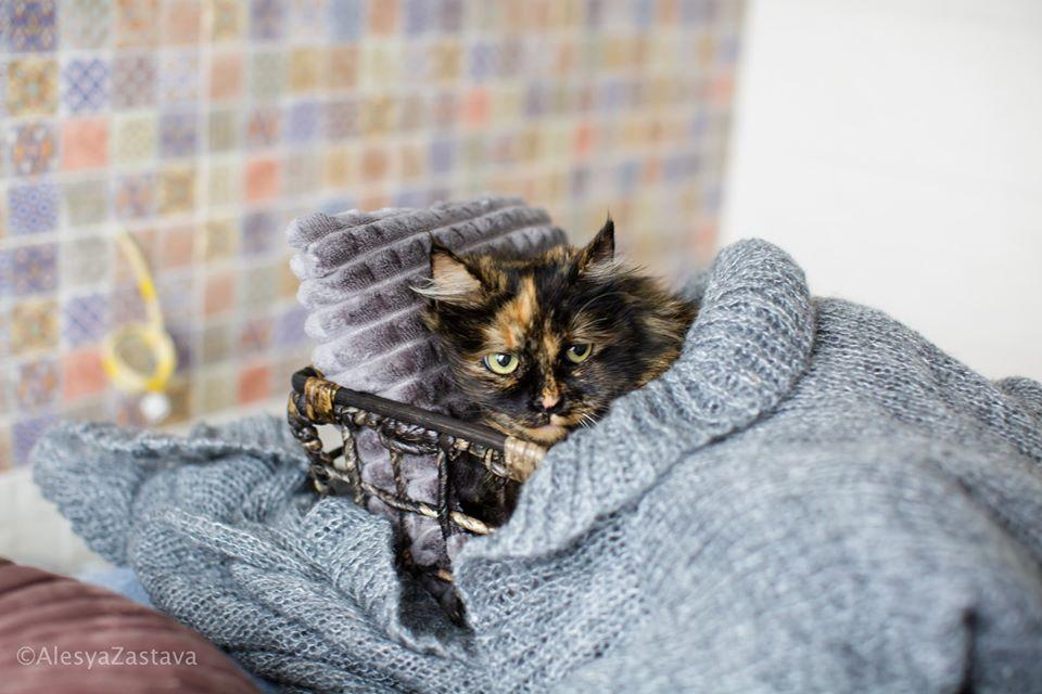 Эта кошечка так и хочет скорее помурчать у вас на коленках