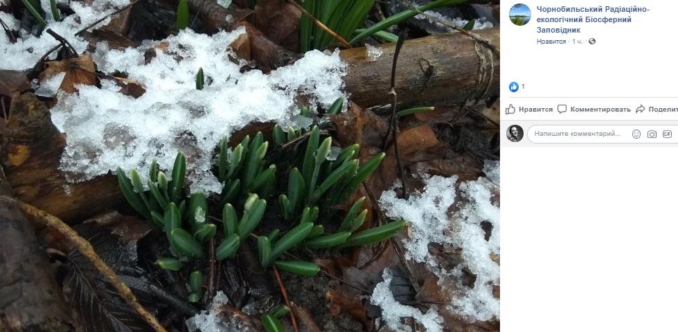Из-за аномального тепла в январе и в феврале в воздухе витает запах весны