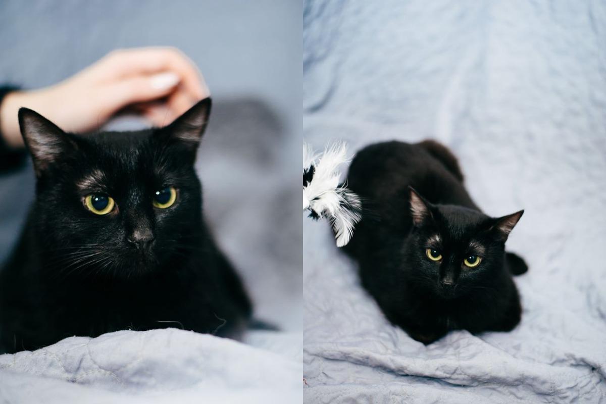 Только черному коту пусть повезет!