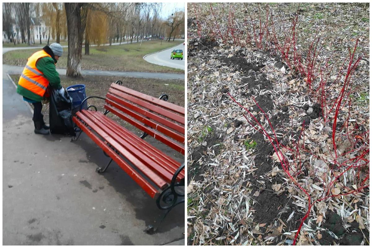 В Святошинском районе Киева неизвестные выкопали 15 кустов дерена