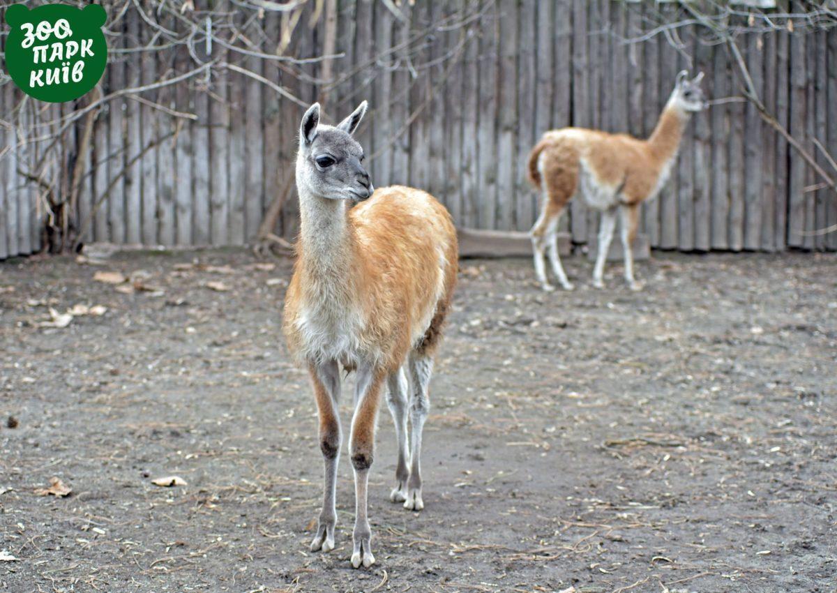 В столичном зоопарке появились новые жители