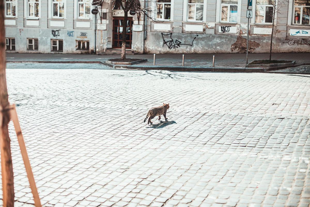 На улицах ни машины, только кошка и может пробежать