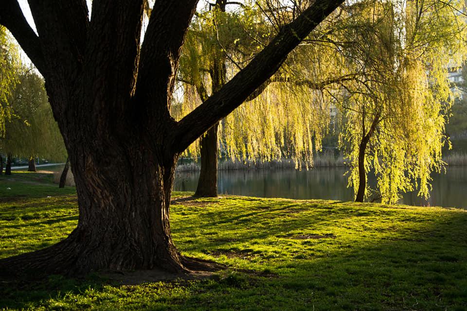 Вокруг озера создана парковая зона отдыха, в северной части озера через него переброшен парковый мостик