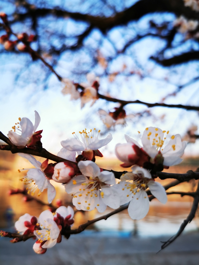 Весна, дай нам надежду, что скоро все вернется!