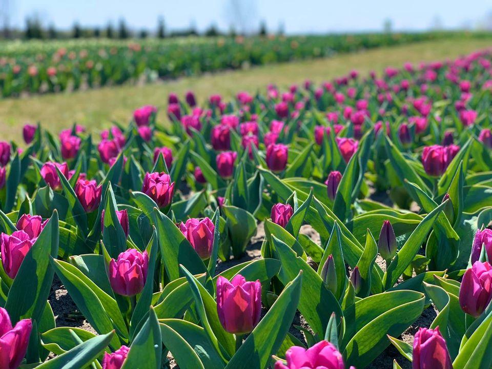 """После сезона тюльпанов посетителей ждут новые сюрпризы от """"Добропарка"""""""